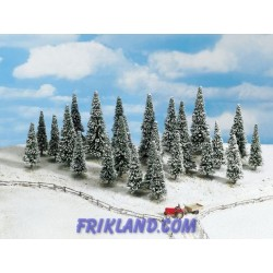 25 Abetos nevados/Snow Fir Trees (25) 6-15 cm high